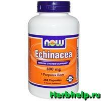 Эхинацея пурпурная (Echinacea purpurea)